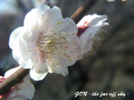 2009-02-18-03.jpg