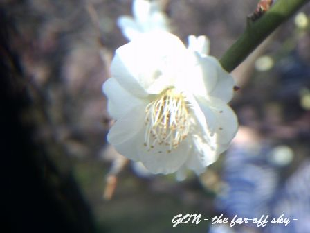 2009-02-18-04.jpg
