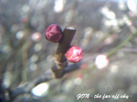 2009-02-18-05.jpg