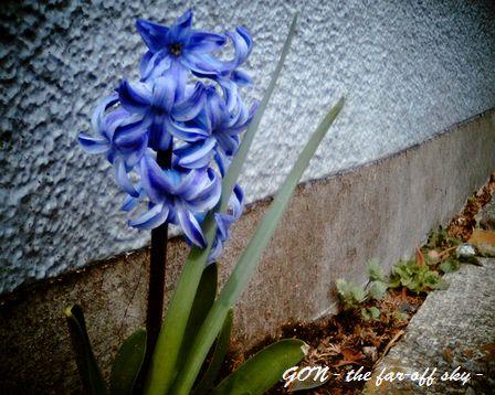 2009-03-11-01.jpg