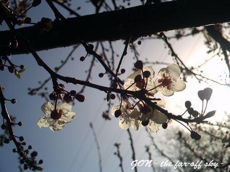 2009-03-16-03.jpg
