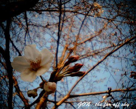 2009-03-28-01.jpg