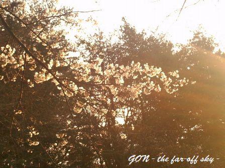 2009-03-28-03.jpg