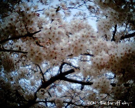 2009-04-04-01.jpg