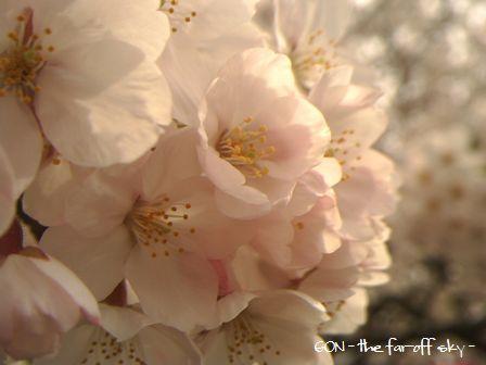 2009-04-04-04.jpg