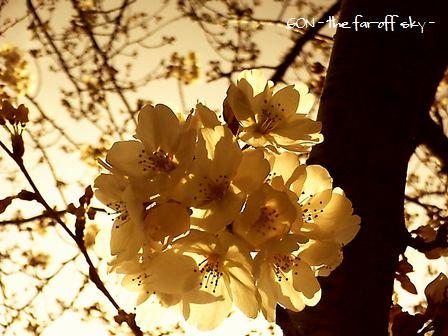 2009-04-04-05.jpg