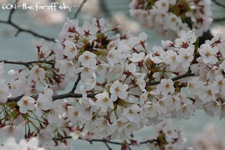 2009-04-04-06.jpg