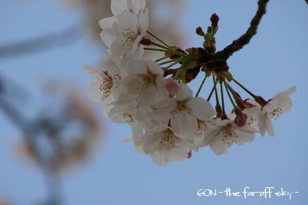 2009-04-04-08.jpg