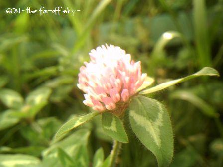 2009-05-10-02.jpg