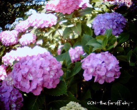 2009-06-08-02.jpg