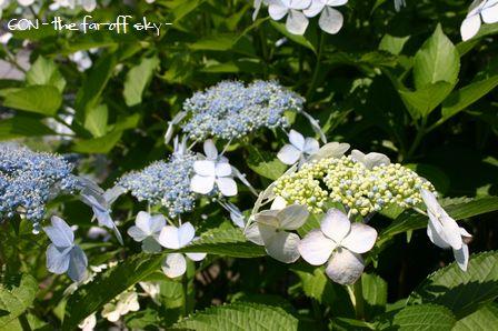 2009-06-08-05.jpg