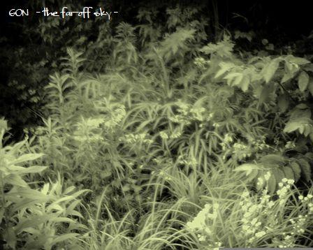 2009-07-25-03.jpg