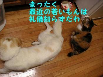 トラいろ劇場 (4)