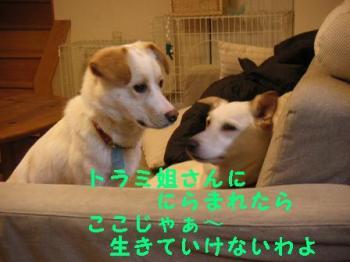 トラいろ劇場 (3)