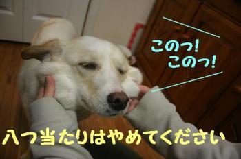 IMG_3545.jpg