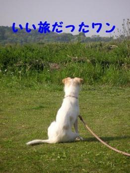 katsura090503.jpg
