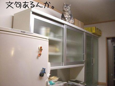 CIMG2350blog.jpg