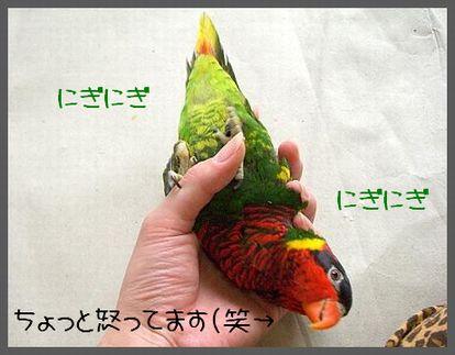 CIMG35761blog.jpg