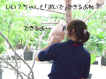 CIMG8085blog.jpg