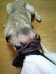 トロとパンダ