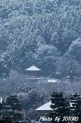 210arasiyama008.jpg