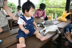 猫とコチコ