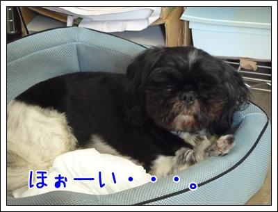 01-20080903.jpg