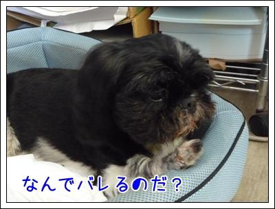 02-20080903.jpg