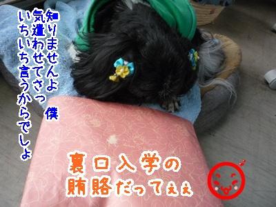 02-2009_02_25.jpg