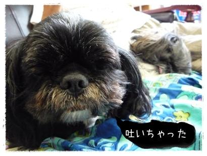 03-20080819.jpg