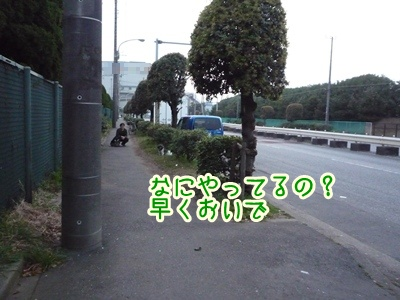 04-090411.jpg