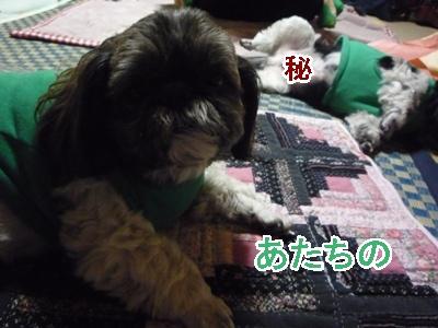 19-2009_02_25.jpg