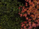 赤と緑のコントラスト