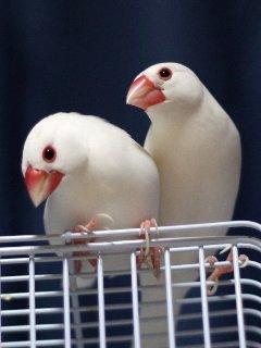 放鳥デート中♪