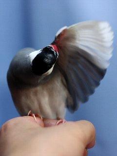 羽も磨いとくよ♪