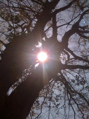 sannou_sunshine_convert_20090502013647.jpg