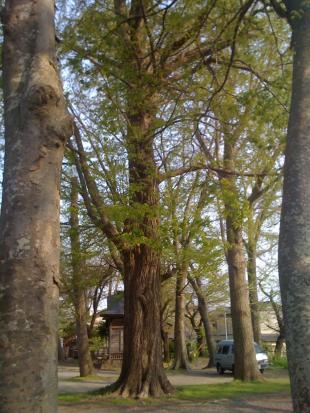 sannouwoods_convert_20090502022743.jpg