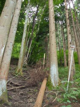 matsukurayama3.jpg
