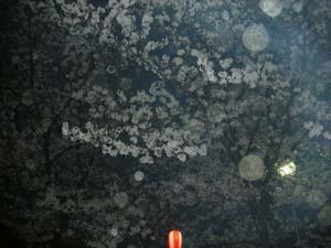 2009花見 013