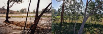 DHMOにより、朽ち果てた森林