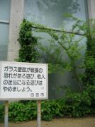 IMG_5929-s.jpg