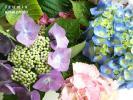 09_20100624014524.jpg