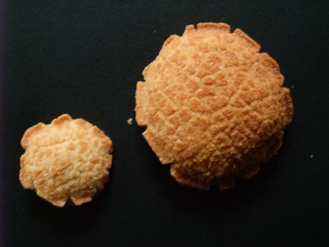 小亀&亀の甲せんべい 大きさ比較 玉木製菓