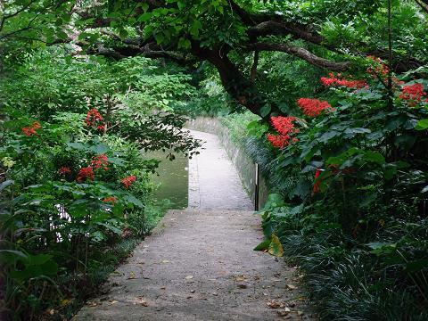龍譚池 (りゅうたんいけ) 池沿いの道 1