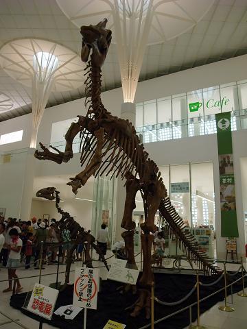 沖縄県立博物館&美術館 ミニ恐竜展 001