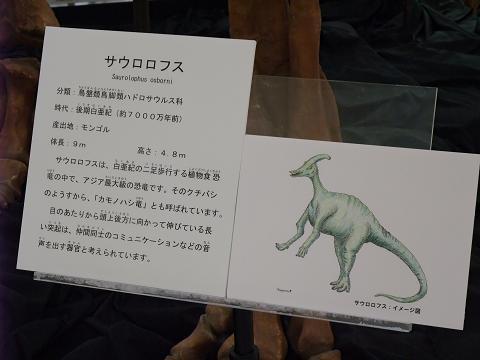 沖縄県立博物館&美術館 ミニ恐竜展 002