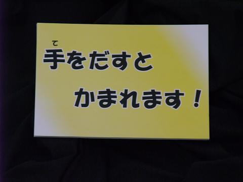 沖縄県立博物館&美術館 ミニ恐竜展 003