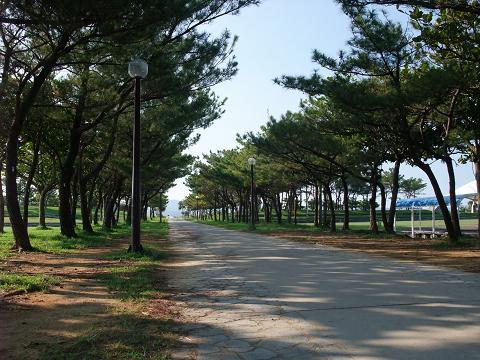 21世紀の森公園 (名護市) 並木道