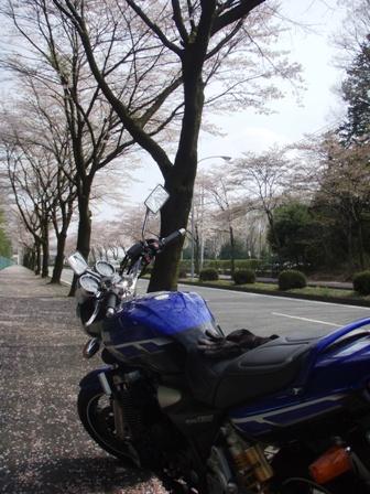 P4190001.jpg