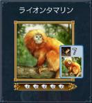 ライオンタマリン